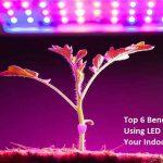Top 6 Benefits of Using LED Lighting for Your Indoor Garden