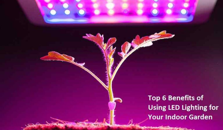 Top 6 Benefits of Using LED Lighting for Your Indoor Garden