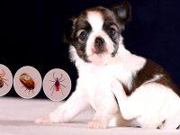 Pet Pest Free